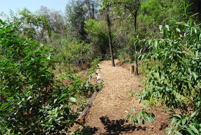 Galer a comunidad litre quillay proyecto jard n bot nico for Jardin botanico cursos